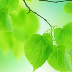 leaves_green_close_up_branch_2560x1600